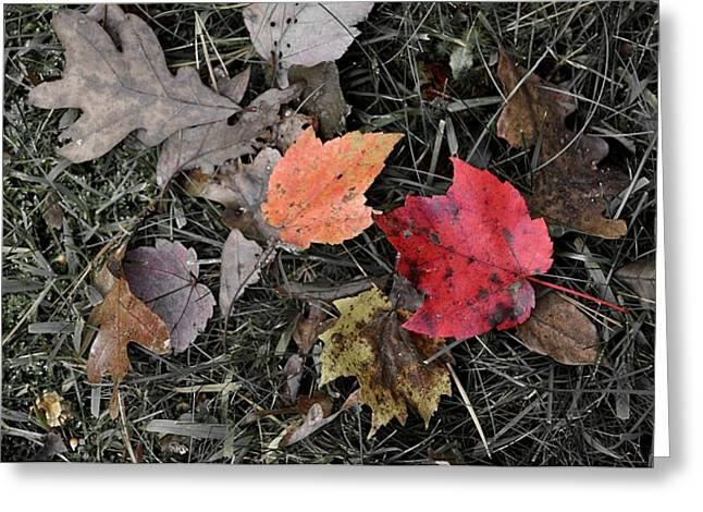 Leaves Are Falling Greeting Card by JAMART Photography