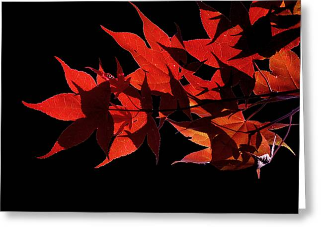 Leaves Of Red Greeting Card by Heather Applegate