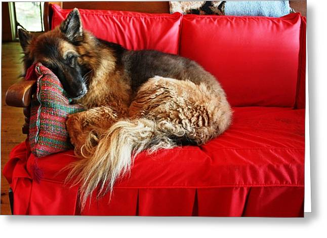 Let Sleeping Dogs Lie Greeting Card by Pat Purdy