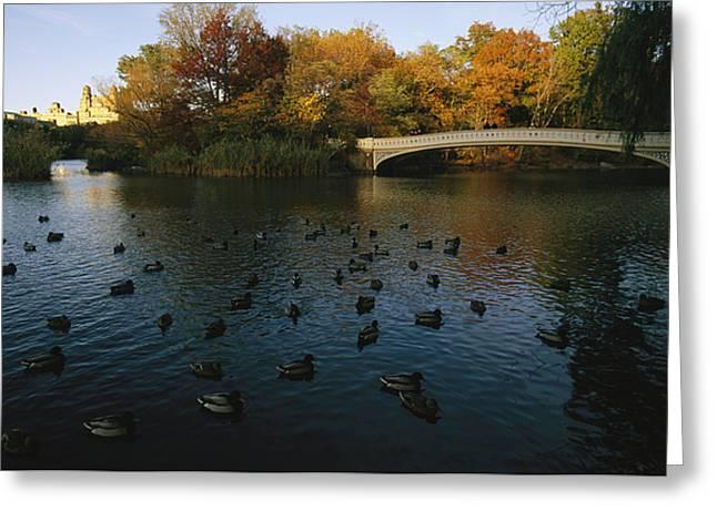 Mallard Ducks Gather At Dusk Greeting Card by Melissa Farlow