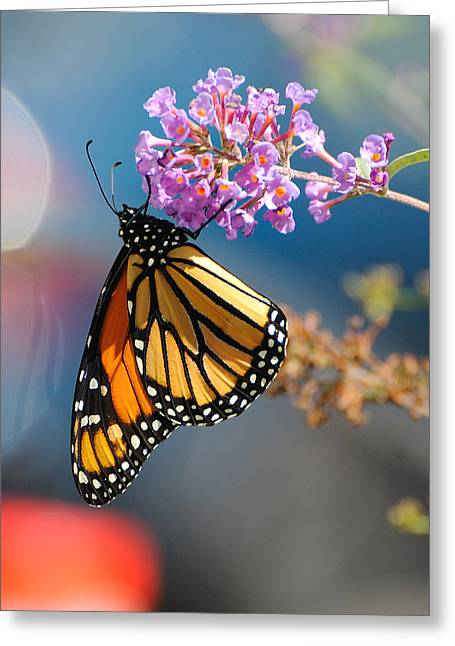 Monarch 2011 E Greeting Card