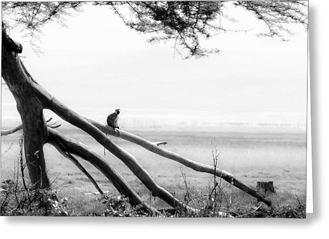 Monkey Alone On A Branch Greeting Card by Darcy Michaelchuk