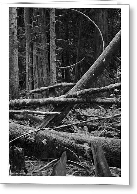 Natural Forest Greeting Card by J D Banks