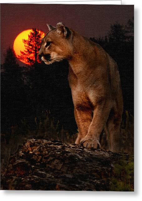 Night Of The Cougar Greeting Card by Wade Aiken