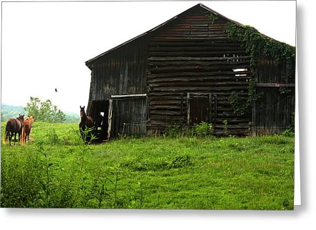 Old Stable And Horses Greeting Card by Emanuel Tanjala