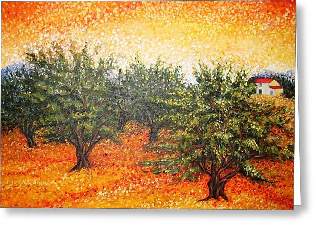 Olive Field In The Sunset Greeting Card