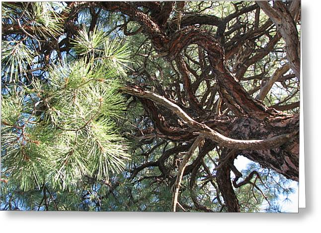 Pine-ally Looking Up Greeting Card