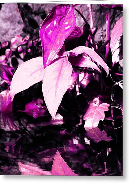 Pink Plant Greeting Card by Kathleen Struckle