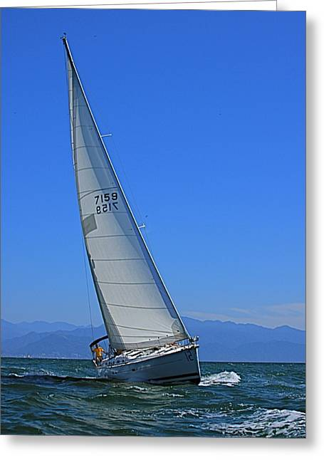 Greeting Card featuring the photograph Pv Regatta Mexico by Nicola Fiscarelli