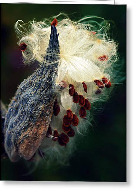 Release The Seed Milkweed Greeting Card