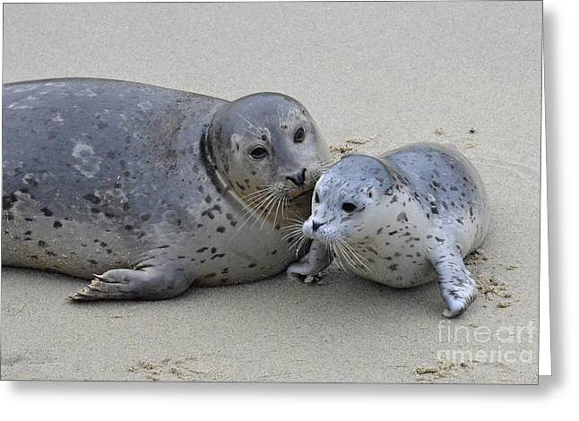 Seal Baby  Greeting Card by Judy Grant