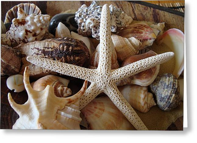 Greeting Card featuring the photograph She Sells Seashells by Tamara Bettencourt