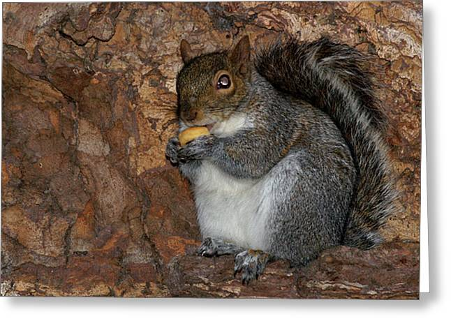 Greeting Card featuring the photograph Squirrell by Pedro Cardona
