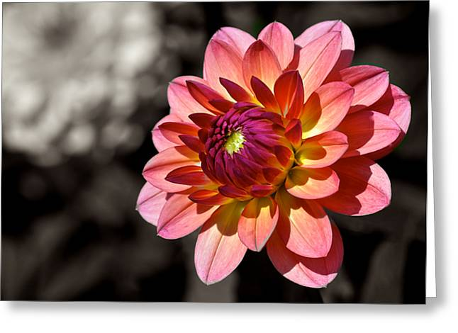 Sunshine Dahlia Greeting Card