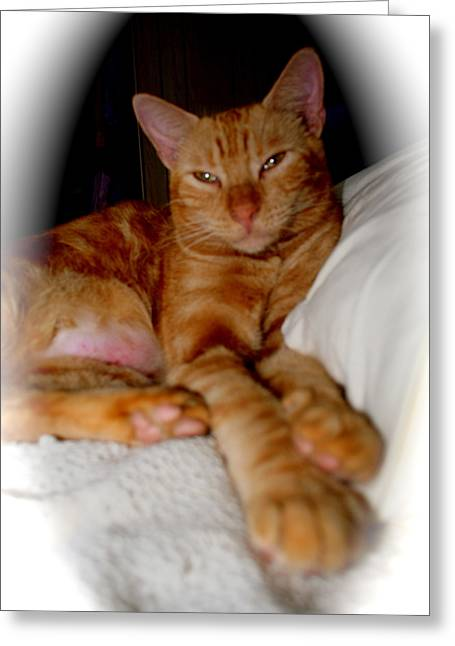 Greeting Card featuring the photograph Tabby by The Art of Alice Terrill
