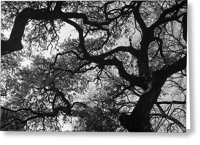 Tree Gazing Greeting Card by Lindsey Orlando