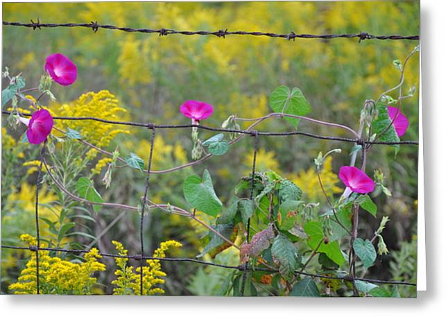Upon The Fence Greeting Card by Brittany H