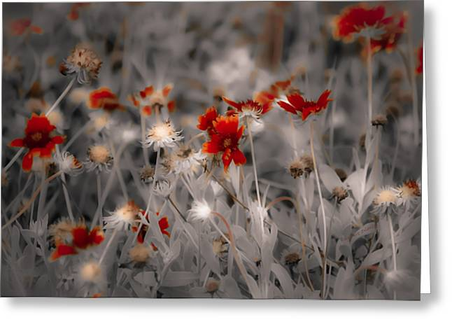 Wildflowers Of The Dunes Greeting Card
