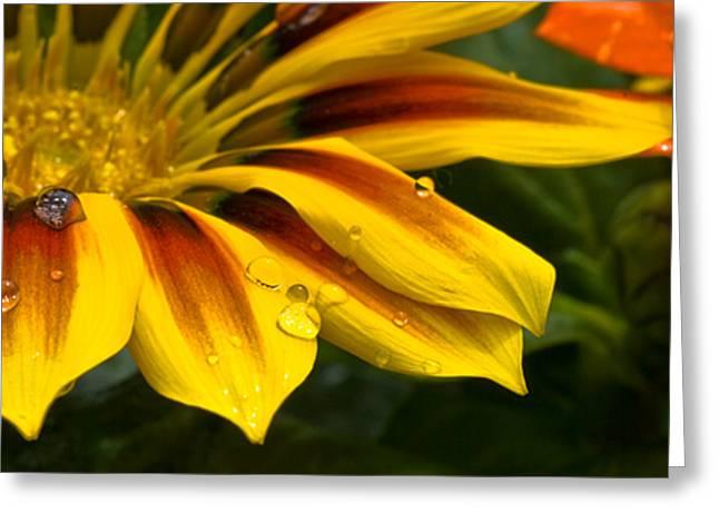 Yellow Drops Greeting Card