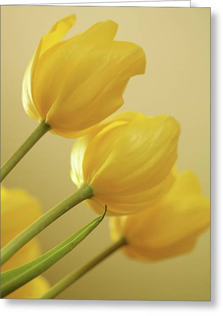 Yellow Tulip Trio Greeting Card by Bonnie Bruno