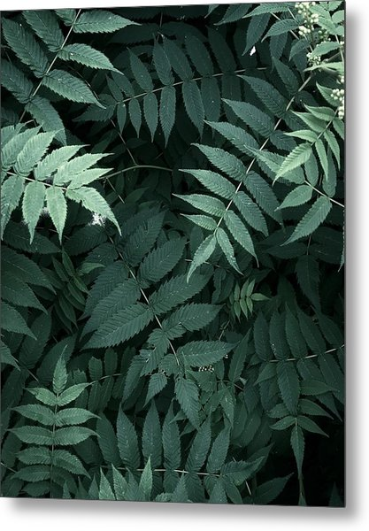 Plants In Forest Metal Print by Alexandr Sherstobitov