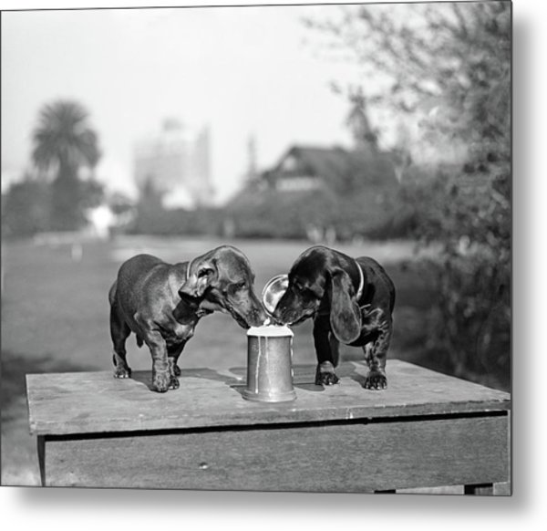 1890s Two Dachshund Puppies Lapping Metal Print