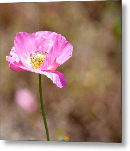 Spring Poppy Flower Metal Print
