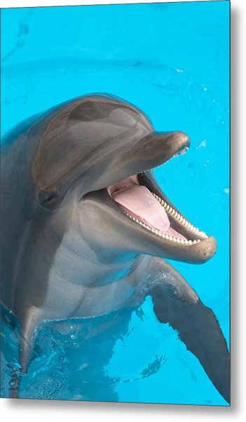 A Close-up Of A Happy Dolphin Swimming Metal Print by To_csa