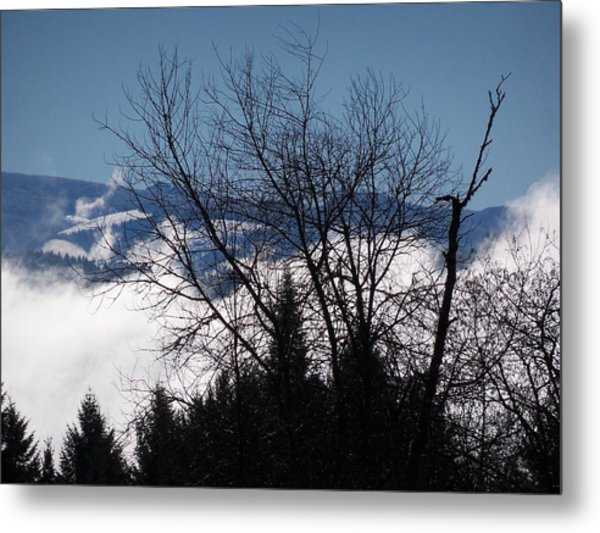 A Winter Day Reaching For The Sky Metal Print