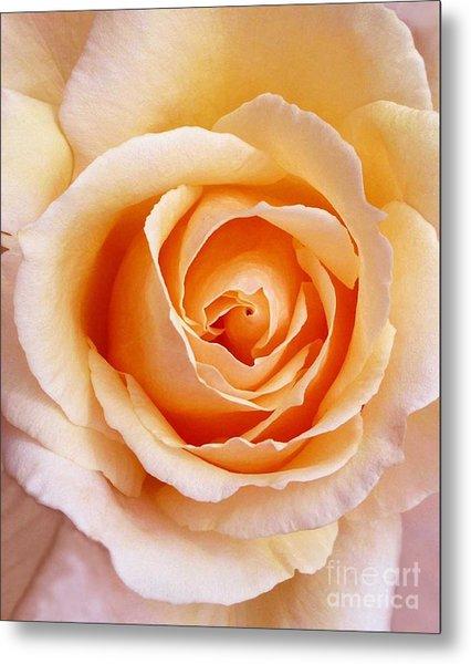 Aranciata Rose Blossom Metal Print