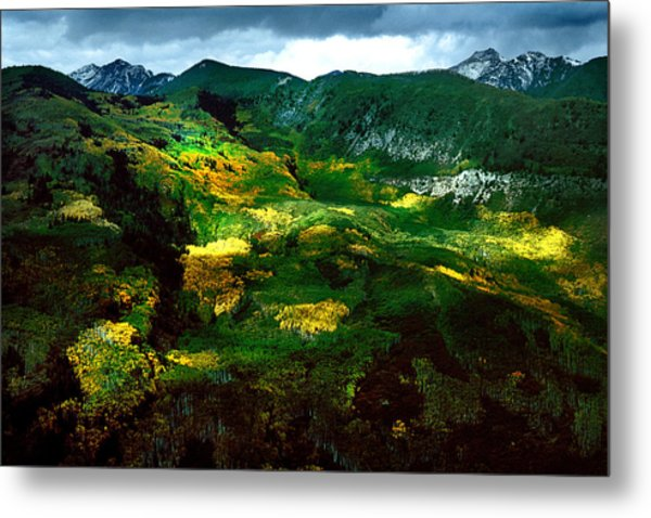 Aspen In Autumn Gold Metal Print