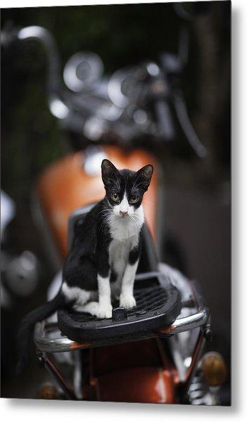 Bangkok Cat Metal Print by David Longstreath