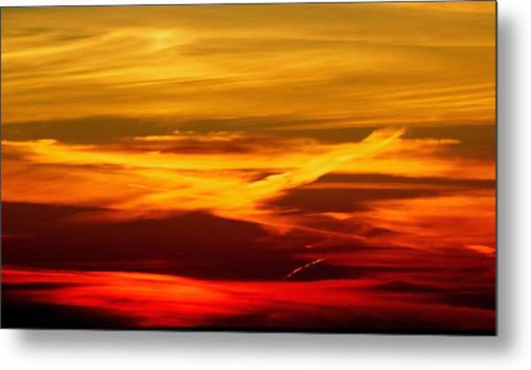 Bird Of Fire Metal Print by Jocelyne Choquette