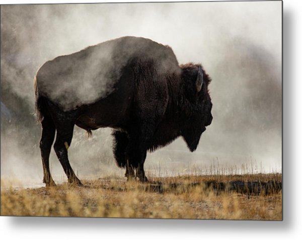 Bison In Mist, Upper Geyser Basin Metal Print