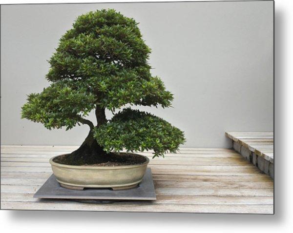 Bonsai Tree Grows In A Pot Metal Print by Rafael Ben-Ari