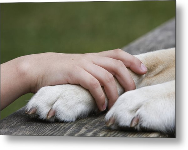 Boy's Hand Resting On His Dog's Paw Metal Print by Compassionate Eye Foundation/Jetta Productions