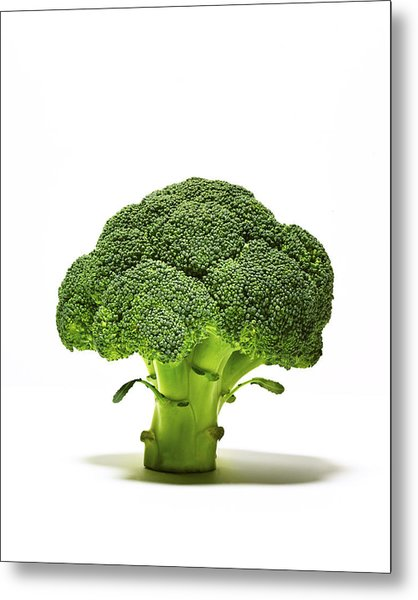 Broccoli Head On Whte Background Metal Print by TS Photography