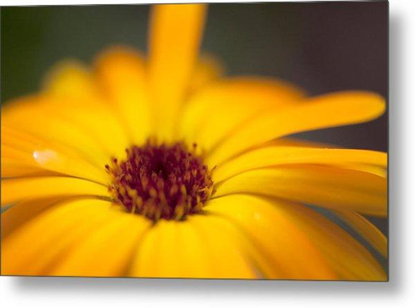 Close-up Of Yellow Flower Metal Print by Paulien Tabak / EyeEm