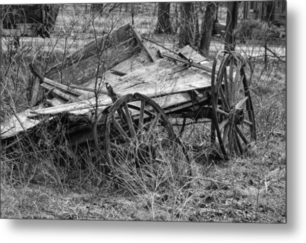 Cotton Picking Tired Metal Print by Kelly Kitchens