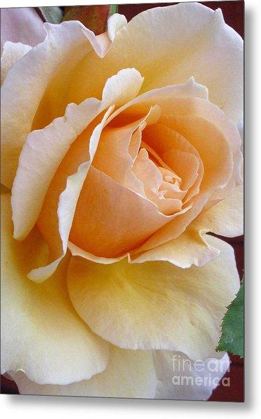 Creamy Pastel Orange Rose Metal Print