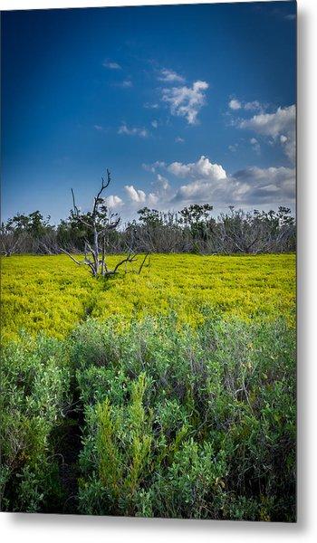 Everglades Tree Metal Print