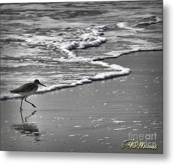 Feathered Friend At The Beach Metal Print