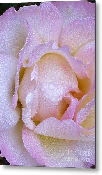 Frosty Pink Rose Morning Metal Print