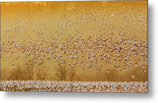 In The Magic Golden Would Metal Print