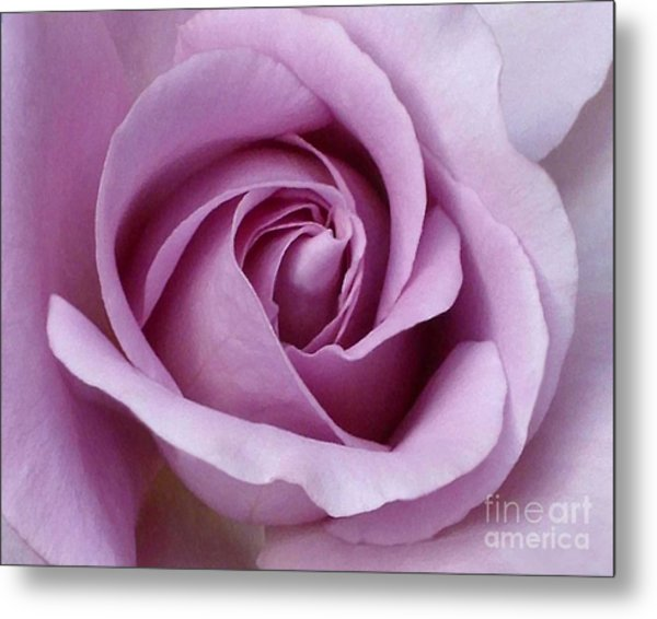 Lavender Rose Blossom 1 Metal Print