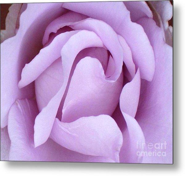 Lavender Rose Blossom 2 Metal Print