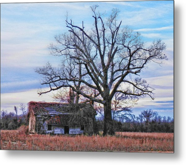Looking For Shade Metal Print
