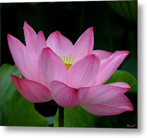 Lotus-center Of Being IIi Dl033 Metal Print