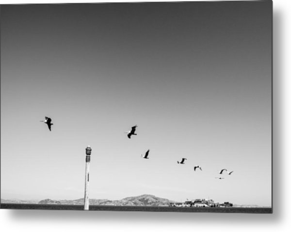 Low Angle View Of Birds Flying Against Clear Sky Metal Print by Christian Soldatke / EyeEm