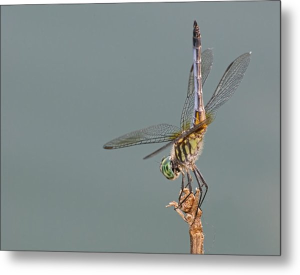 Mooned By A Dragon Metal Print